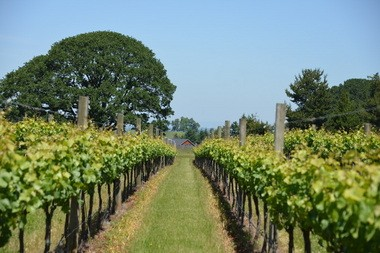Mahonia Vineyard is part of a family business that grew out of an urban design enterprise.