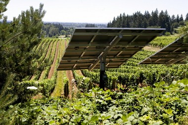Oregon's wine industry has long been a leader in sustainability, such as using solar panels at Sokol Blosser Winery.