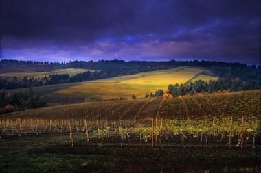 Knudsen Vineyards on a stormy day. Photo courtesy of Janis Miglavs.