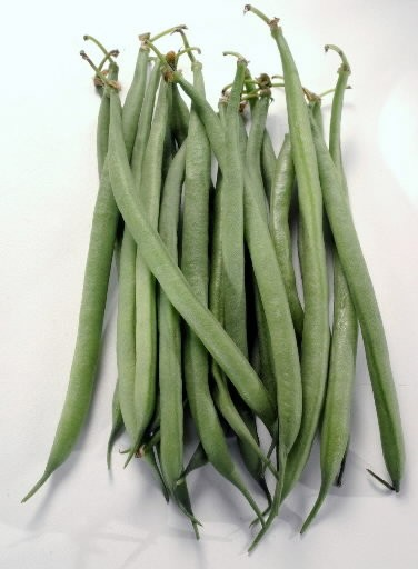 Haricots vert are immature green bean pods, eaten young, tender and lightly cooked.