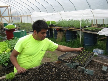 Pedro Arenas, a previous student in Adelante Mujeres' Sustainable Agriculture program, transplants the herb epazote in 2011 at La Esperanza Farm.