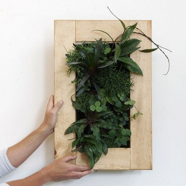 A living picture made with cryptanthus and neoregelia bromeliads, rhipsalis cactus, haworthia, hoya and peperomia.
