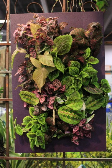 At the Portland Home & Garden Show in 2012, coleus offered colorful art.