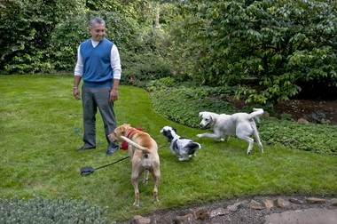 Cesar Millan, well-known for his dog behavior training, advocates artificial lawn.