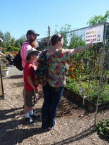 A family visiting The Oregon Garden stops to check out the grafted vegetable demonstration garden planted by OSU Extension Service Master Gardeners.
