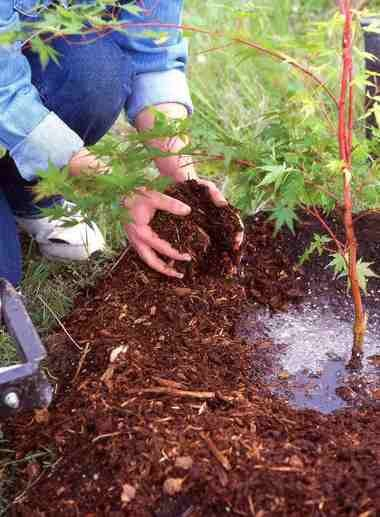 Mulching is beneficial when planting a tree, especially when planting a bare root specimen.
