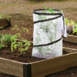Gardener's Supply Pop-Up Tomato Accelerator give's you a head start to harvesting ripe tomatoes weeks ahead of schedule.