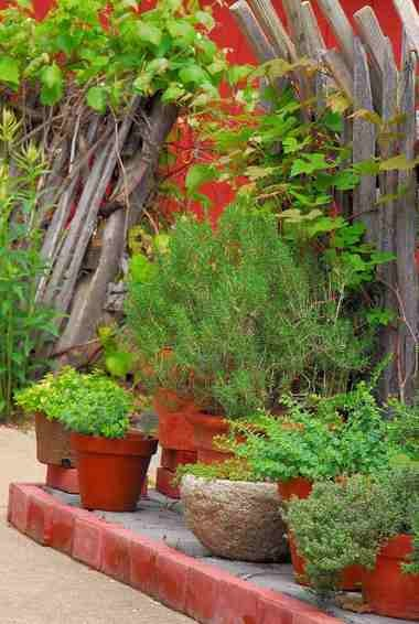 A collection of containers filled with rosemary, oregano, thyme and other culinary herbs adds interest to this rustic fence.