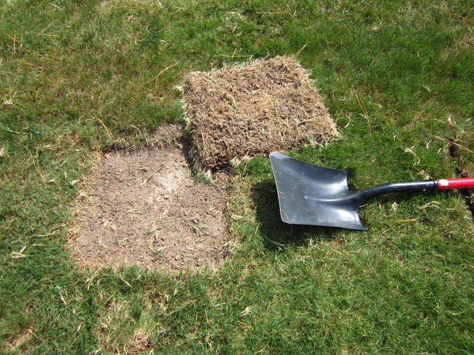 Twenty-five to 50 crane fly larvae in a 1-square-foot of lawn means you've got a problem.