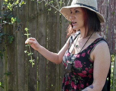 Rebecca Lerner describes the use for cleavers, a common urban weed, during a wild foraging walk in Northeast Portland.