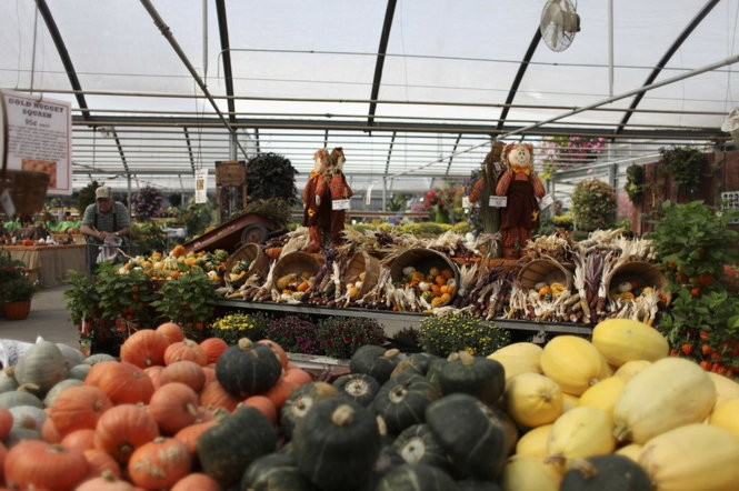 Your 2017 guide to pumpkin patches and harvest festivals in
