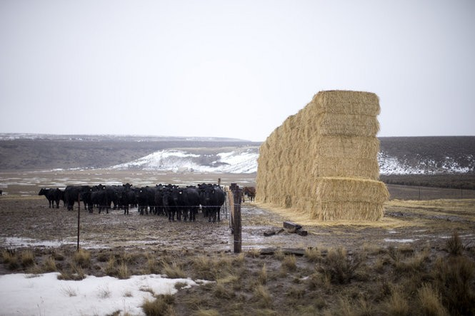 Oregon standoff: A chronicle of an occupation - oregonlive com