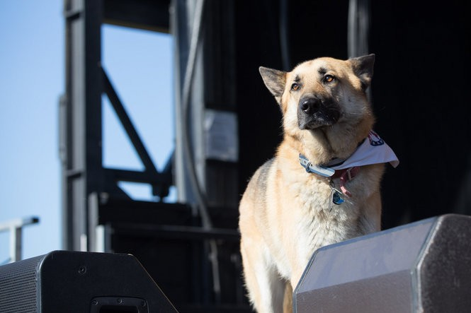 Conner Youngblood's dog, Juneau, steps out for his set at the Sasquatch! music festival at the Gorge Amphitheatre in George, Washington, on May 29, 2016. (David Greenwald/The Oregonian)
