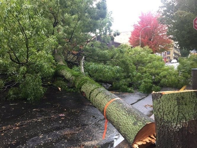 A tree blocked the street at Northwest Flanders and 12th Avenue. (Dillon Pilorget photo)