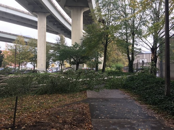 A tree has fallen, at about 3:15 p.m. Saturday, at Northwest 17th Avenue and Raleigh Street. (Karly Imus photo)