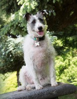 Rose: A 3 yr old Terrier mix!