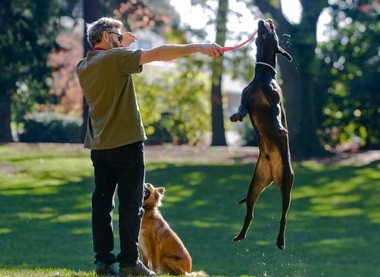 There's reason for dogs in Portland to jump for joy, according to one analysis.