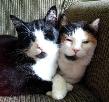 Salinger and Sophia both have hyperthryoidism, but their condition is easily manageable with medication.