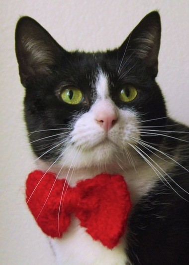 """A cat displays a handmade bow tie from Becca Priddy's """"Business Catual"""" line."""