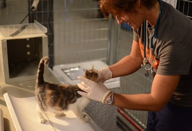 A cat rendered homeless by Hurricane Sandy is examined by a veterinarian at the ASPCA Emergency Boarding Facility in Brooklyn, N.Y