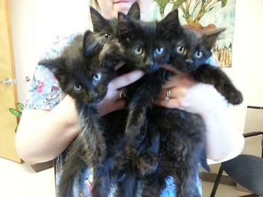 At Cat Adoption Team in Sherwood, black cats do stay longer than cats of other colors.