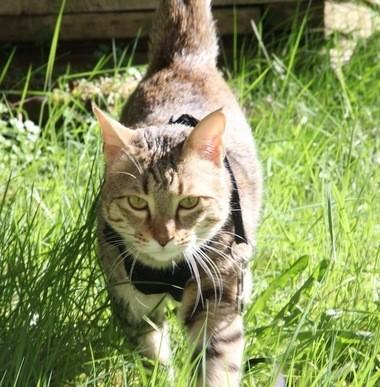Helene Knott believes Koshka might be a rare Russian breed called a Ussuri.