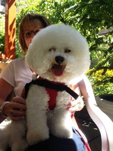 Connie McFall and her bichon frise, Missy May, visit patients and their families at Randall Children's Hospital at Legacy Emanuel every Monday.