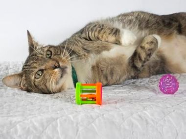 Offer cats plenty of interactive toys to keep them happy at home.