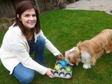 Nicole Nicassio-Hiskey gives enrichment to her dog Dozer using a muffin tin with treats and kibble which are covered with tennis balls and other toys.