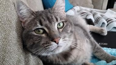 Elliott, a 2-year-old male cat, suffered from a urinary obstruction but lived to meow about it.
