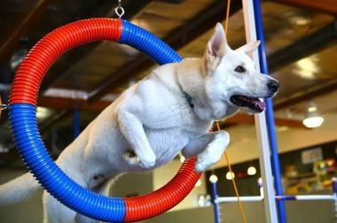 Zoom room indoor dog gym celebrates grand opening saturday in