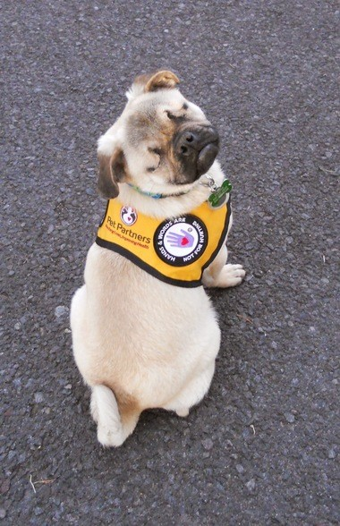 Xander, a blind therapy pug from Klamath Falls, was among five national winners of the AKC Humane Fund Award for Canine Excellence.