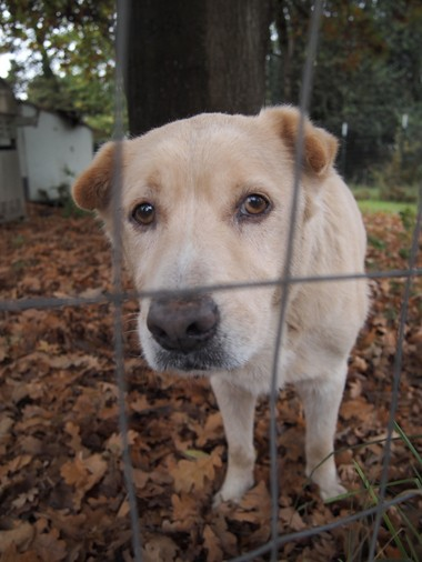 Chopper was the first dog to be unchained by Fences for Fido in May 2009.