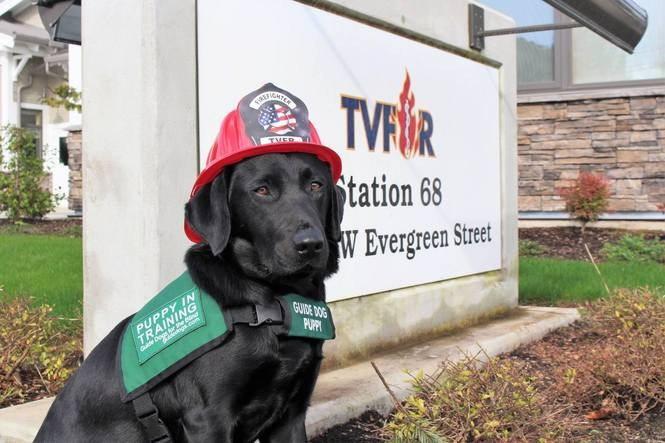 Guide dog puppies take a trip to the fire station (photos