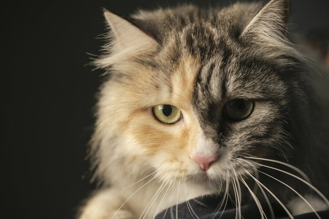Playing it safe with your pets: Microchips and ID tags work