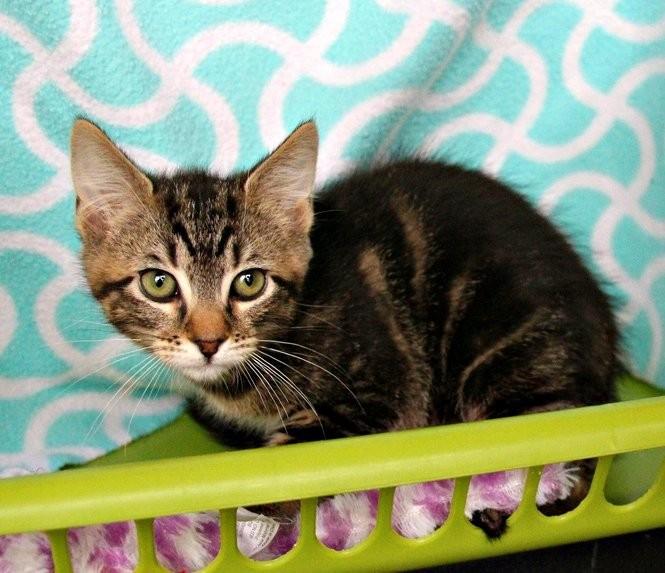 Portland-area pets for adoption Dec  5 (photos) - oregonlive com
