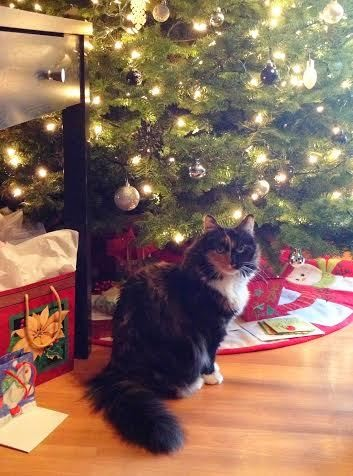 Some holiday decorations could cause harm your pet, such as tinsel, ornaments and electric lights.