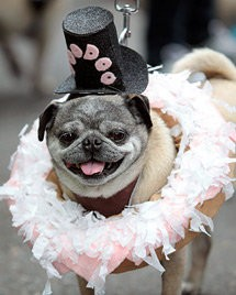 """Dirty Snow Pug,"" in honor of Voodoo Doughnut, was the winner of the 2011 ""Puglandia"" Pug Crawl."