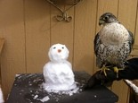 The snowman and the falcon outside the front door of Christopher and Cait Boyce's home in Terrebonne, Oregon.