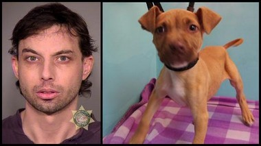 Brent A. Klausner, left, was arrested Thursday on accusations that he tried to steal a puppy, Burkhead, right, from the Oregon Humane Society on January 14.