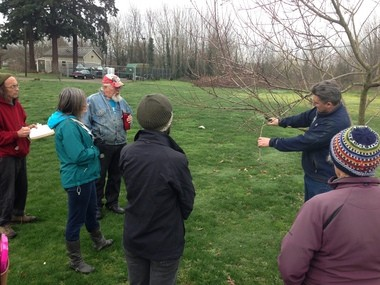 Jeff Moore from Urban Forest Pro leads a winter pruning class at the future site of the North Portland Community Orchard.