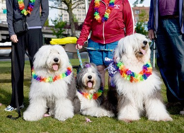Decked-out English sheepdogs turned in 2012 at the Oregon Humane Society's Doggie Dash, which is expected to draw 3,500 canines and 5,000 people this Saturday to Waterfront Park.