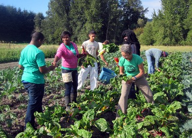 Food Works youths Kyle, whose back is turned, and Tiara, facing him, work with Kathy Albert, right, Sisters volunteer, and Sammy, behind her, a Sisters customer, on the Food Works farm on Sauvie Island. Food Works has a policy of not publishing its youth workers' last names.