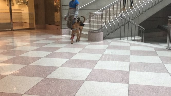 A man who identified himself as a friend of comedian Katt Williams and a German Shepherd service dog attended a court hearing for Williams in Multnomah County Circuit Court on Oct. 8, 2018. A driver sued Williams the same day, alleging he was attacked by Williams and chased by the comedian and a German Shepherd at the Portland International Airport on Oct. 5. It's unclear if this is the dog alleged to be involved. (Maxine Bernstein/The Oregonian)
