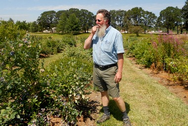 USDA curator and pathologist Joseph Postman, 58, tastes one of 1,690 varieties of blueberries that can be found at the National Clonal Germplasm Repository outside Corvallis. The facility also houses strawberry, mint, pear, apple and nut tree varieties from around the world.