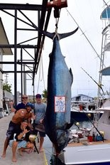 Dean Lemman stands next to the 1,226.5-pound marlin he landed off Kona, Hawaii, after a 2.5-hour battle. Lemman was there on a fishing trip with his son Tim and two of Tim's friends, Adam Garside and Josh Little.