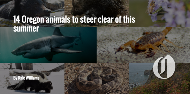 Dangerous animals of Oregon: 13 to avoid - oregonlive com