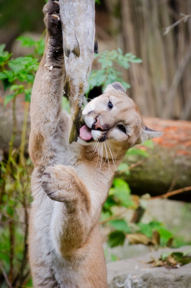Oregon Zoo Animals List
