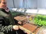 Farm manager Meredith Kope raises micro greens hydroponically for garnishes in Goodstone's restaurant.