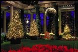 A Longwood Gardens Christmas features a dazzling display of Christmas trees and poinsettias during the holiday season.